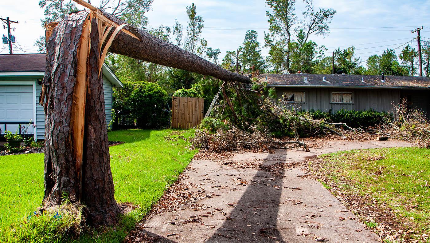 被飓风折断的树干,倒落在屋顶上。摄影/林书贤