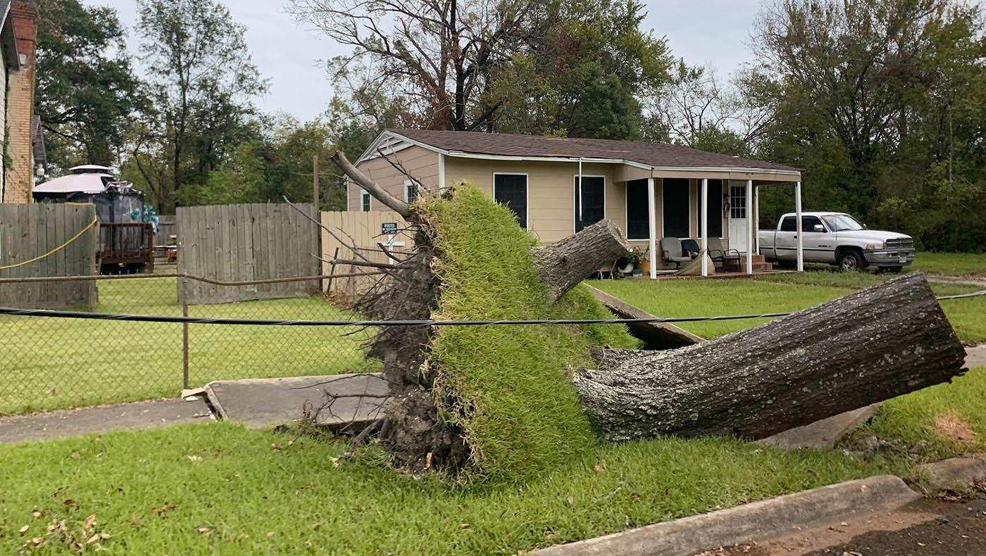强劲的飓风吹倒了橙县住宅前的树木。摄影/林书贤