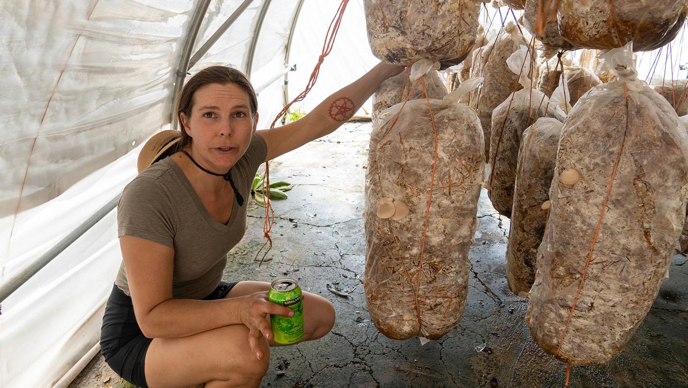 薩曼莎的先生致力於研究溫室蘑菇的培育方法,因此他們擁有兩個溫室大棚種滿了鮑魚菇。攝影 / 曾奐珣