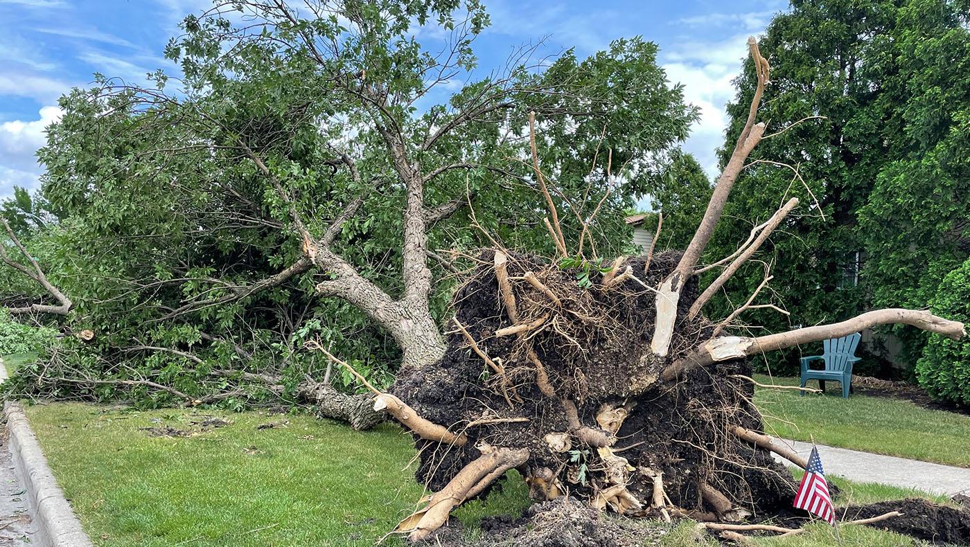 時速135英里強風,將大樹被連根拔起。攝影/馬樂