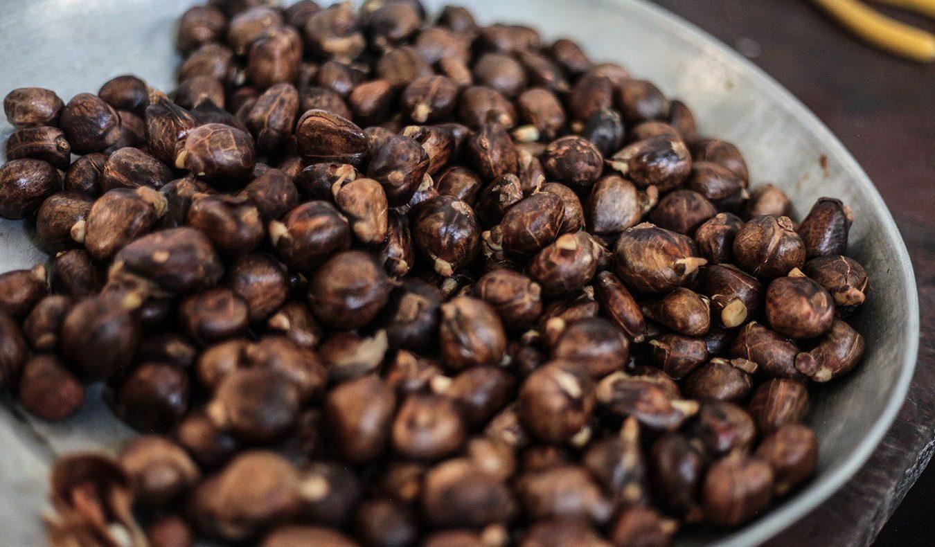 海地人常吃的栗子。攝影/凱辛雅